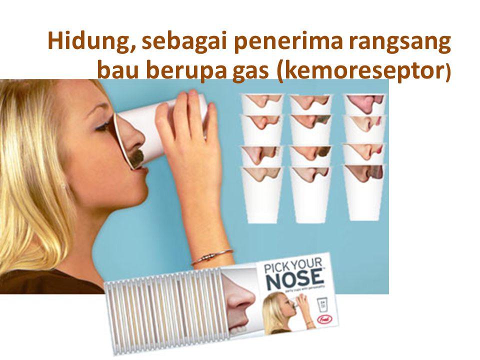 Hidung, sebagai penerima rangsang bau berupa gas (kemoreseptor)