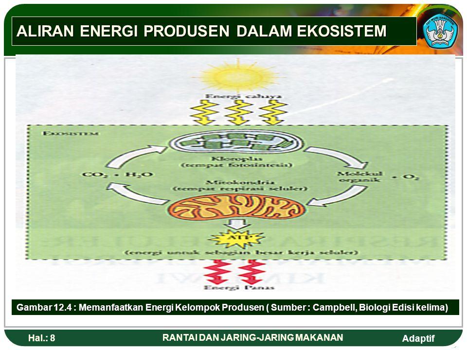 ALIRAN ENERGI PRODUSEN DALAM EKOSISTEM