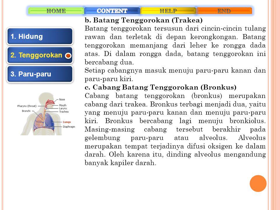 b. Batang Tenggorokan (Trakea)