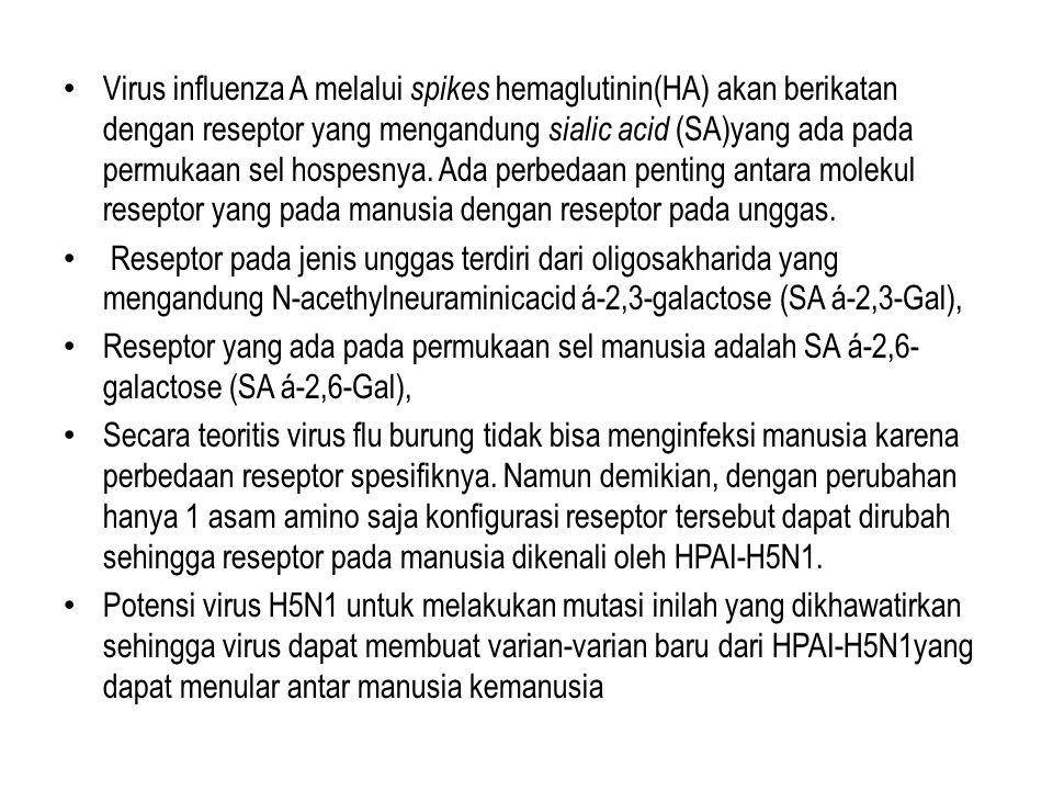 Virus influenza A melalui spikes hemaglutinin(HA) akan berikatan dengan reseptor yang mengandung sialic acid (SA)yang ada pada permukaan sel hospesnya. Ada perbedaan penting antara molekul reseptor yang pada manusia dengan reseptor pada unggas.