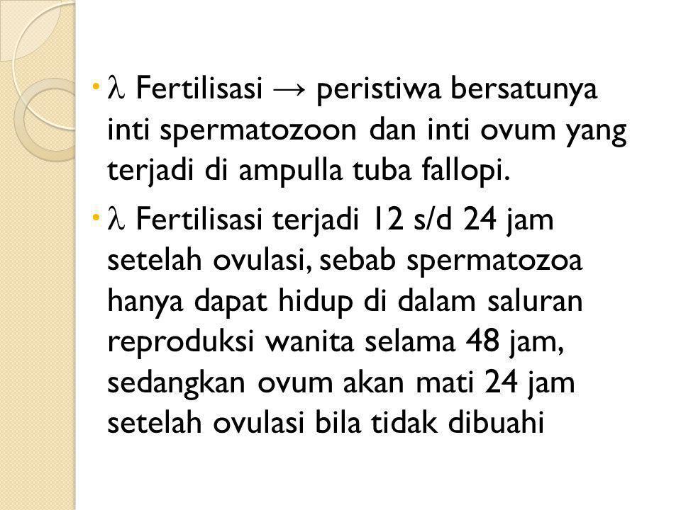  Fertilisasi → peristiwa bersatunya inti spermatozoon dan inti ovum yang terjadi di ampulla tuba fallopi.