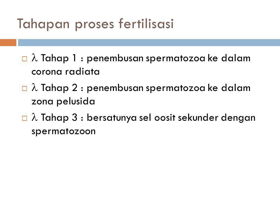 Tahapan proses fertilisasi