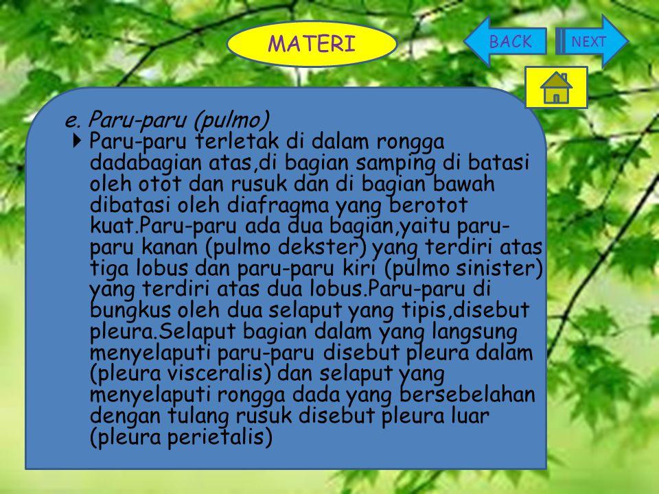 MATERI e. Paru-paru (pulmo)