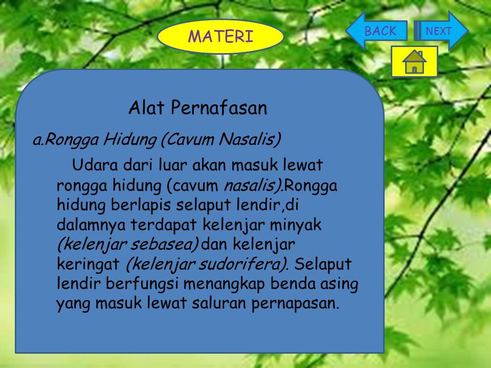 BACK NEXT. MATERI. Alat Pernafasan. a.Rongga Hidung (Cavum Nasalis)