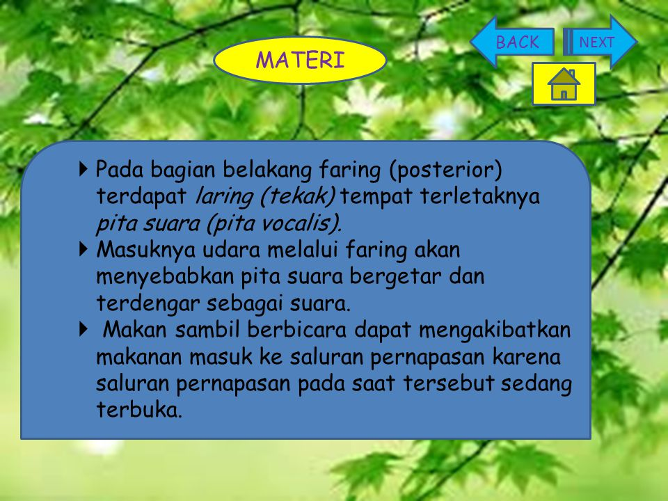 BACK NEXT. MATERI. Pada bagian belakang faring (posterior) terdapat laring (tekak) tempat terletaknya pita suara (pita vocalis).