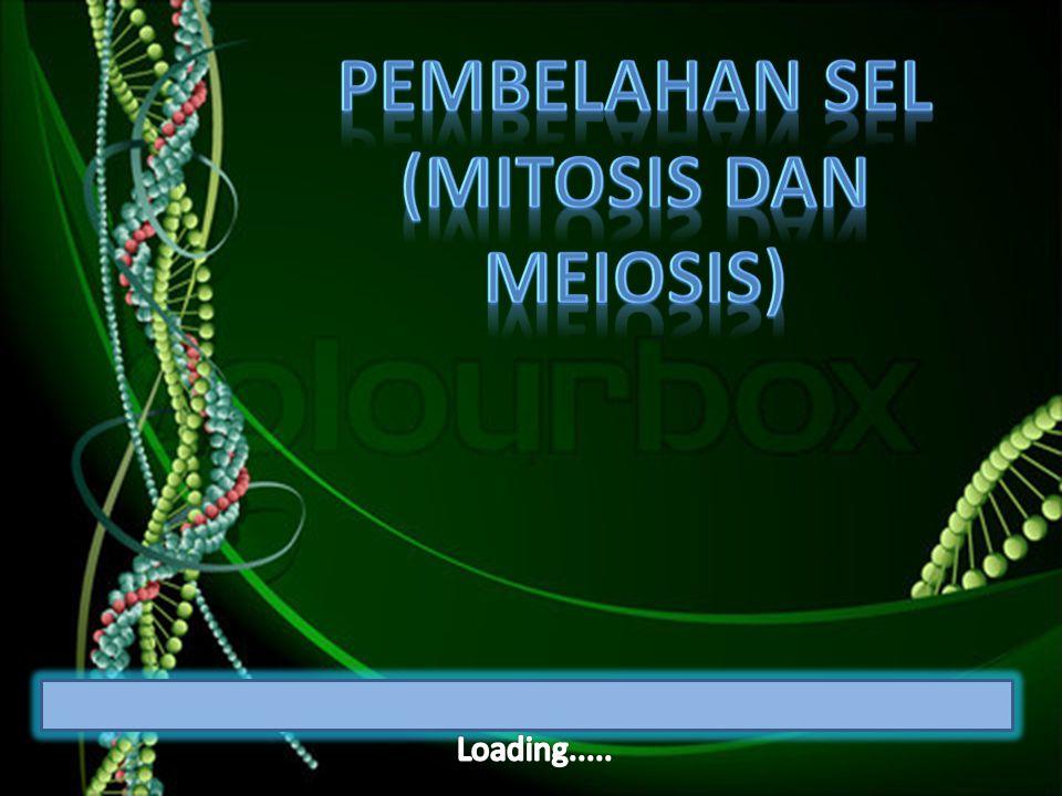 Pembelahan sel (mitosis dan meiosis)
