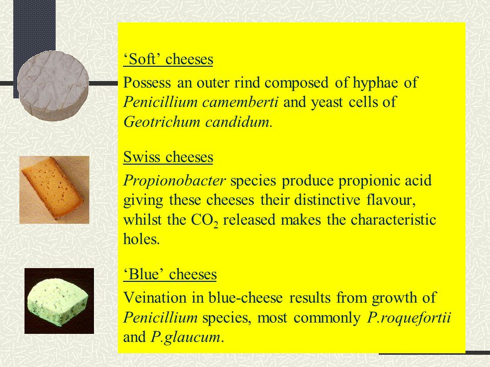 'Soft' cheeses Possess an outer rind composed of hyphae of Penicillium camemberti and yeast cells of Geotrichum candidum.