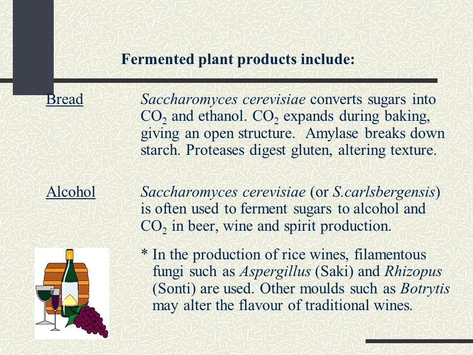 Fermented plant products include:
