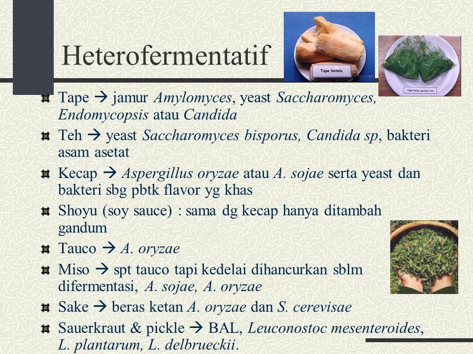 Heterofermentatif Tape  jamur Amylomyces, yeast Saccharomyces, Endomycopsis atau Candida.