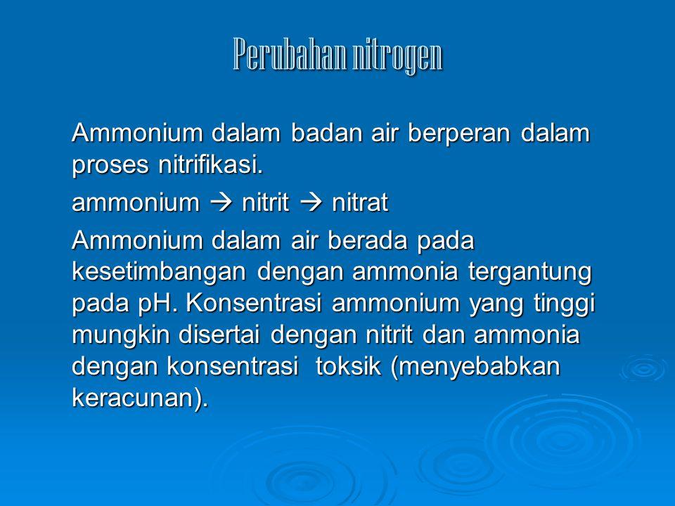Perubahan nitrogen Ammonium dalam badan air berperan dalam proses nitrifikasi. ammonium  nitrit  nitrat.