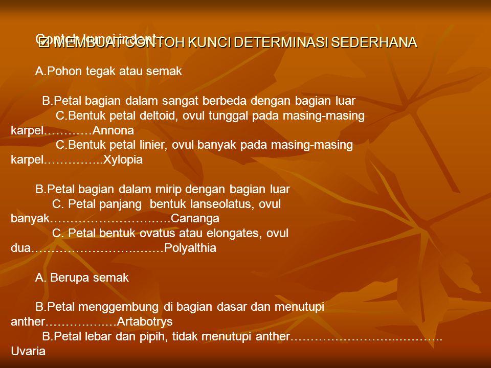  MEMBUAT CONTOH KUNCI DETERMINASI SEDERHANA Contoh kunci indent :