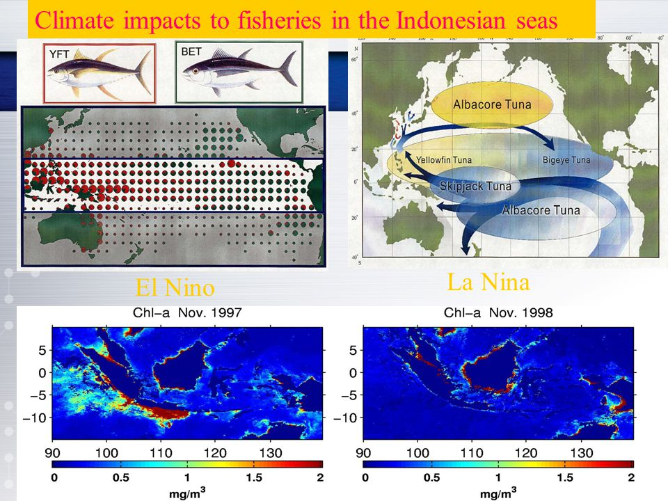 Climate impacts to fisheries in the Indonesian seas