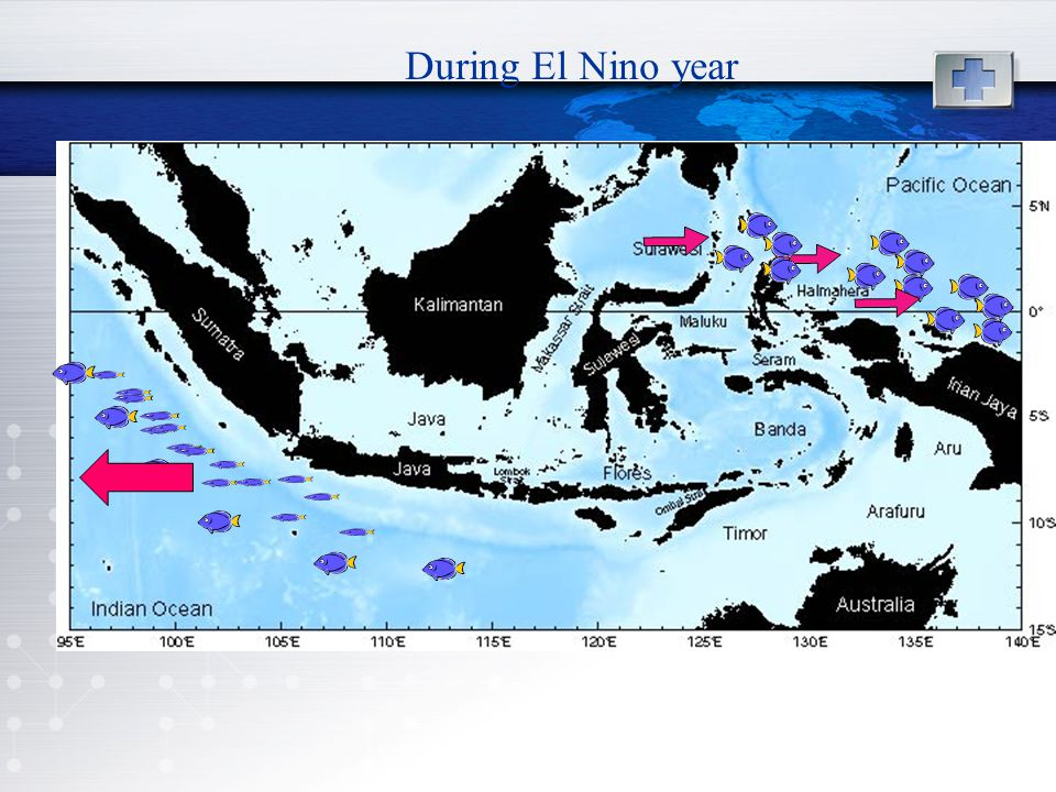 During El Nino year