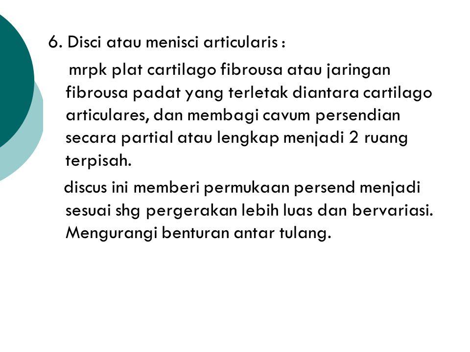6. Disci atau menisci articularis :