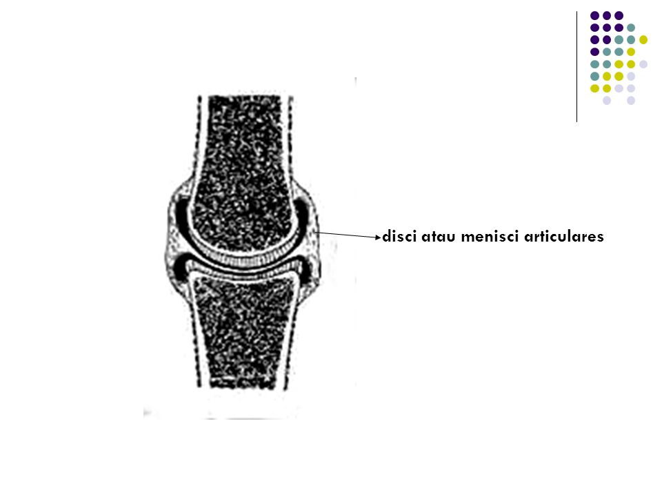 disci atau menisci articulares