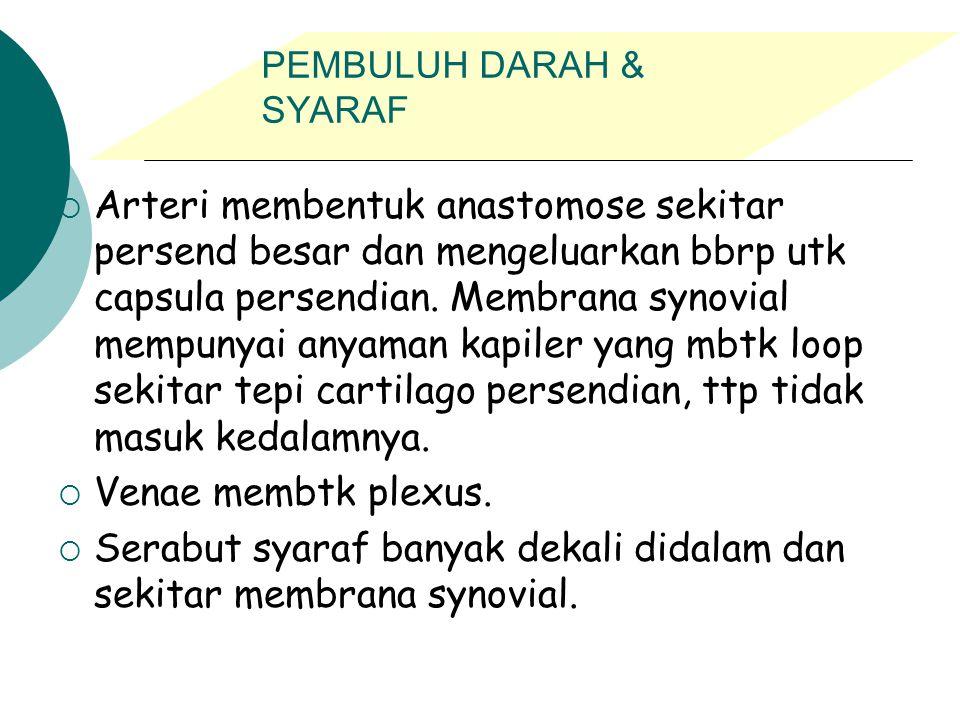 PEMBULUH DARAH & SYARAF