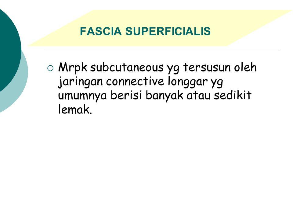 FASCIA SUPERFICIALIS Mrpk subcutaneous yg tersusun oleh jaringan connective longgar yg umumnya berisi banyak atau sedikit lemak.