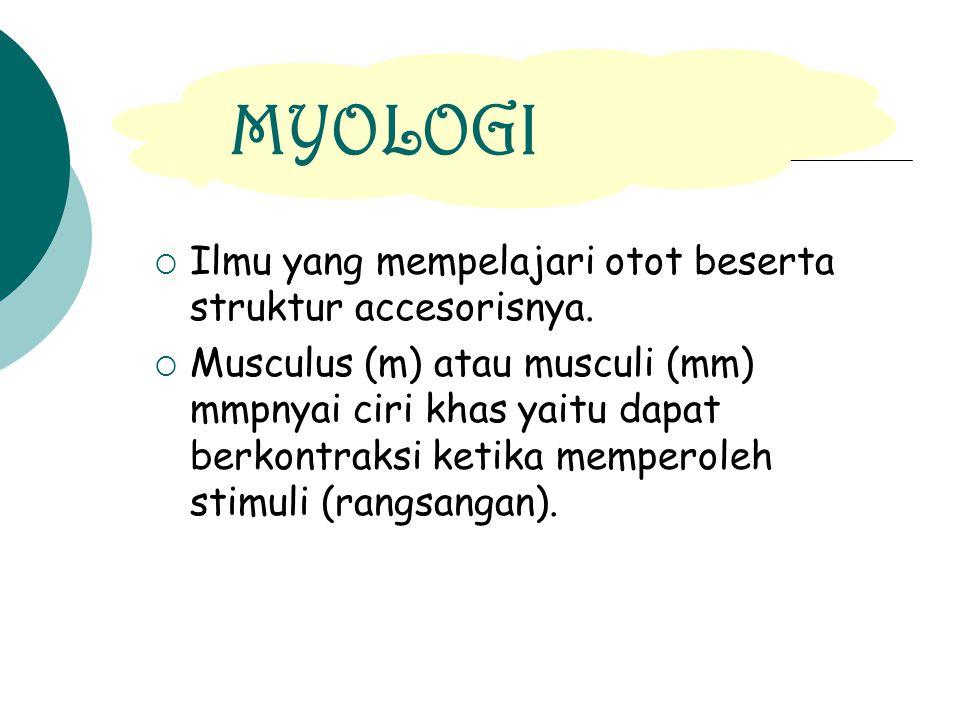MYOLOGI Ilmu yang mempelajari otot beserta struktur accesorisnya.