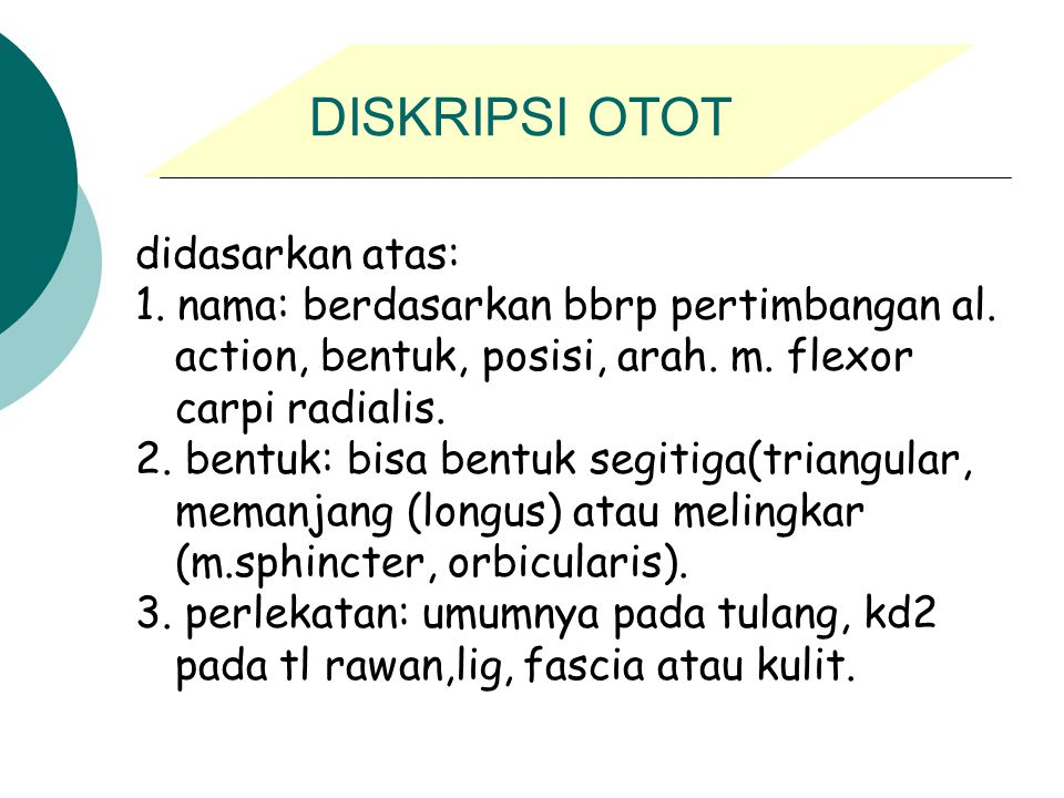 DISKRIPSI OTOT didasarkan atas: