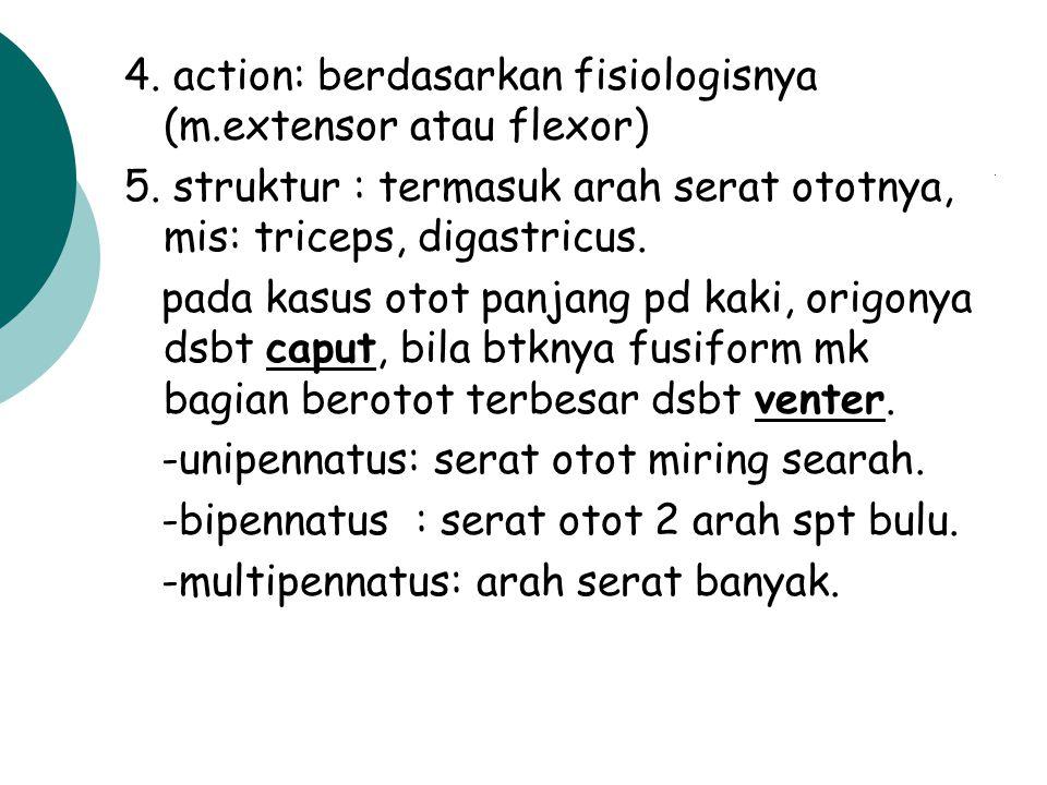 4. action: berdasarkan fisiologisnya (m.extensor atau flexor)