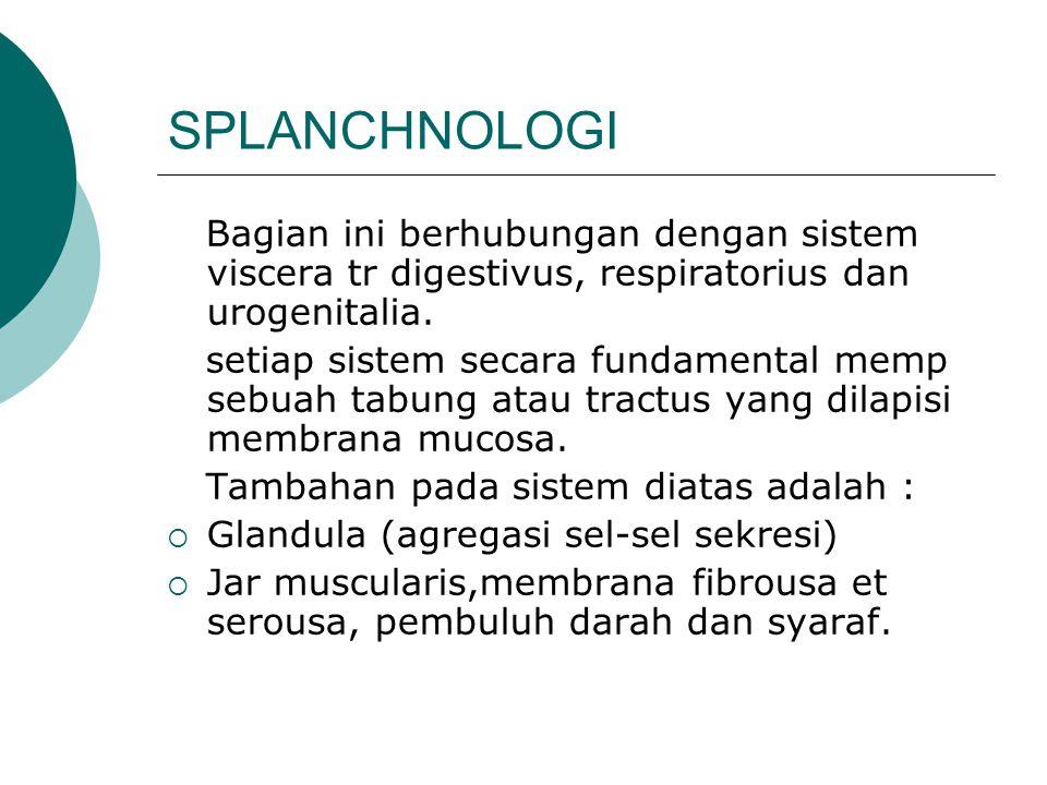 SPLANCHNOLOGI Bagian ini berhubungan dengan sistem viscera tr digestivus, respiratorius dan urogenitalia.