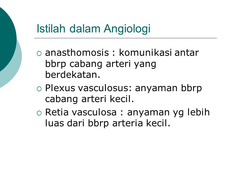 Istilah dalam Angiologi