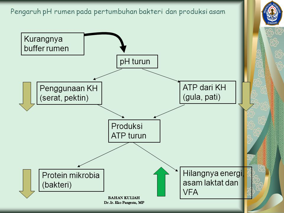 Pengaruh pH rumen pada pertumbuhan bakteri dan produksi asam