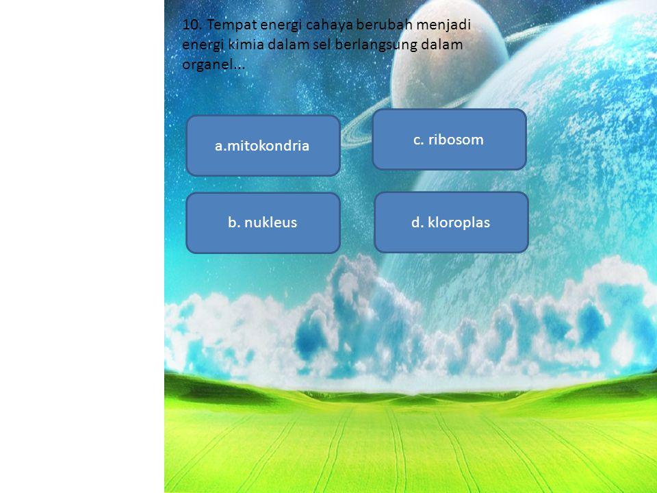 10. Tempat energi cahaya berubah menjadi energi kimia dalam sel berlangsung dalam organel...