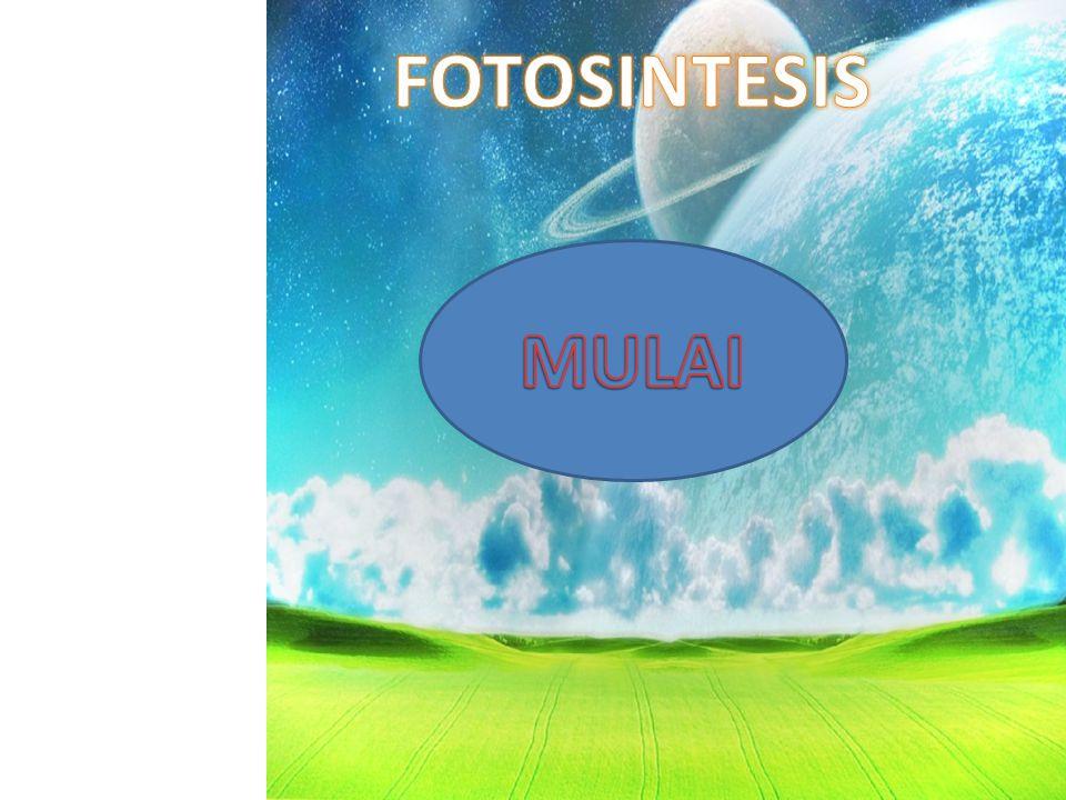 FOTOSINTESIS MULAI