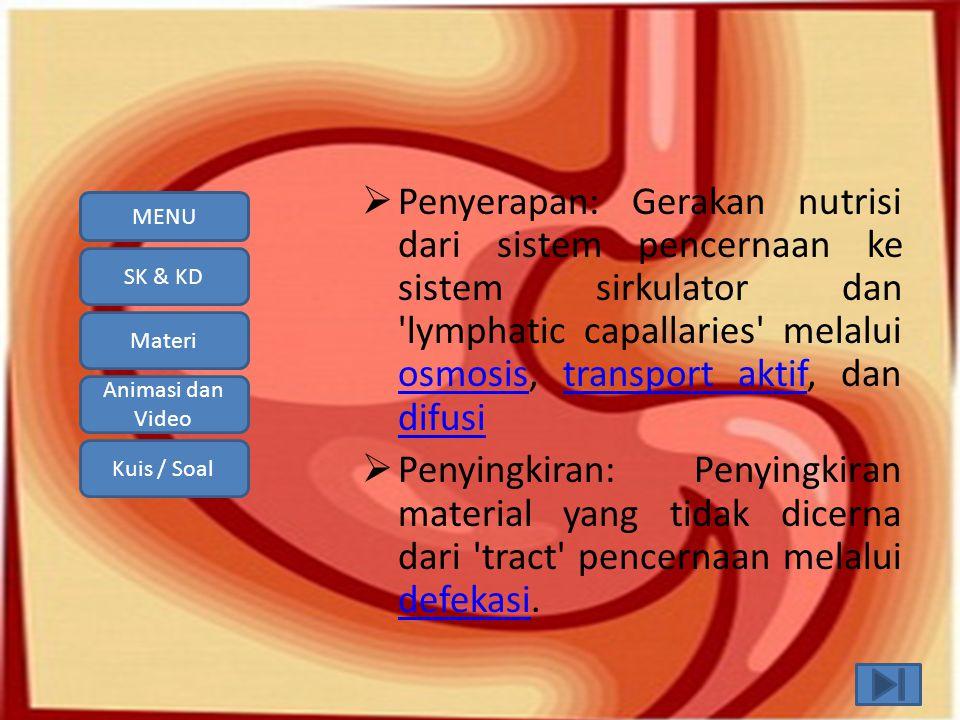 Penyerapan: Gerakan nutrisi dari sistem pencernaan ke sistem sirkulator dan lymphatic capallaries melalui osmosis, transport aktif, dan difusi