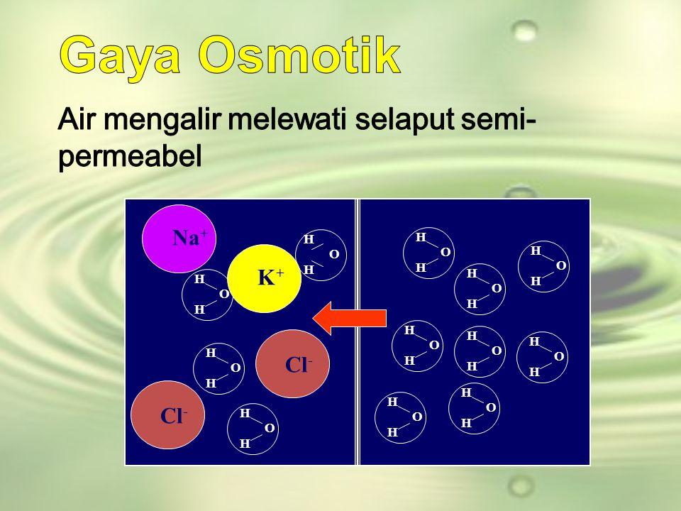 Gaya Osmotik Air mengalir melewati selaput semi-permeabel Na+ K+ Cl- H