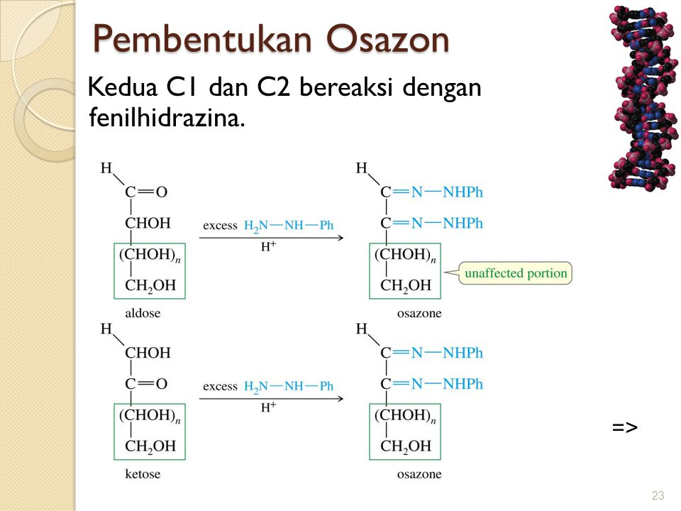 Pembentukan Osazon Kedua C1 dan C2 bereaksi dengan fenilhidrazina.