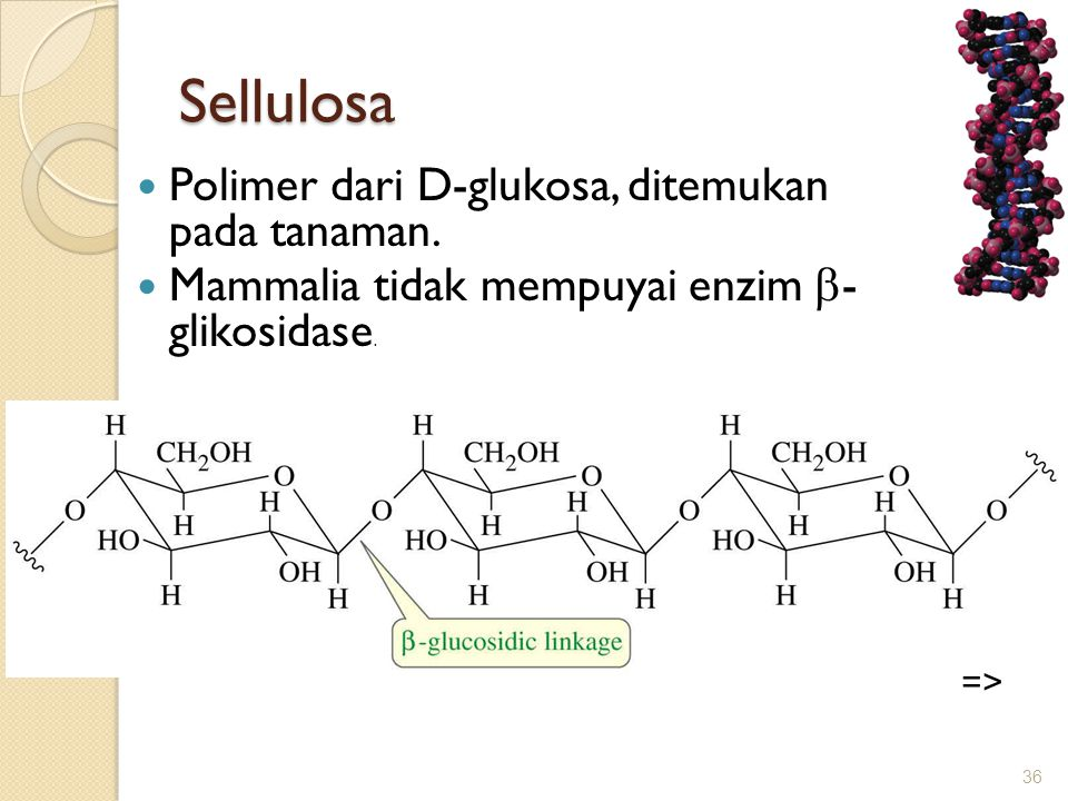 Sellulosa Polimer dari D-glukosa, ditemukan pada tanaman.