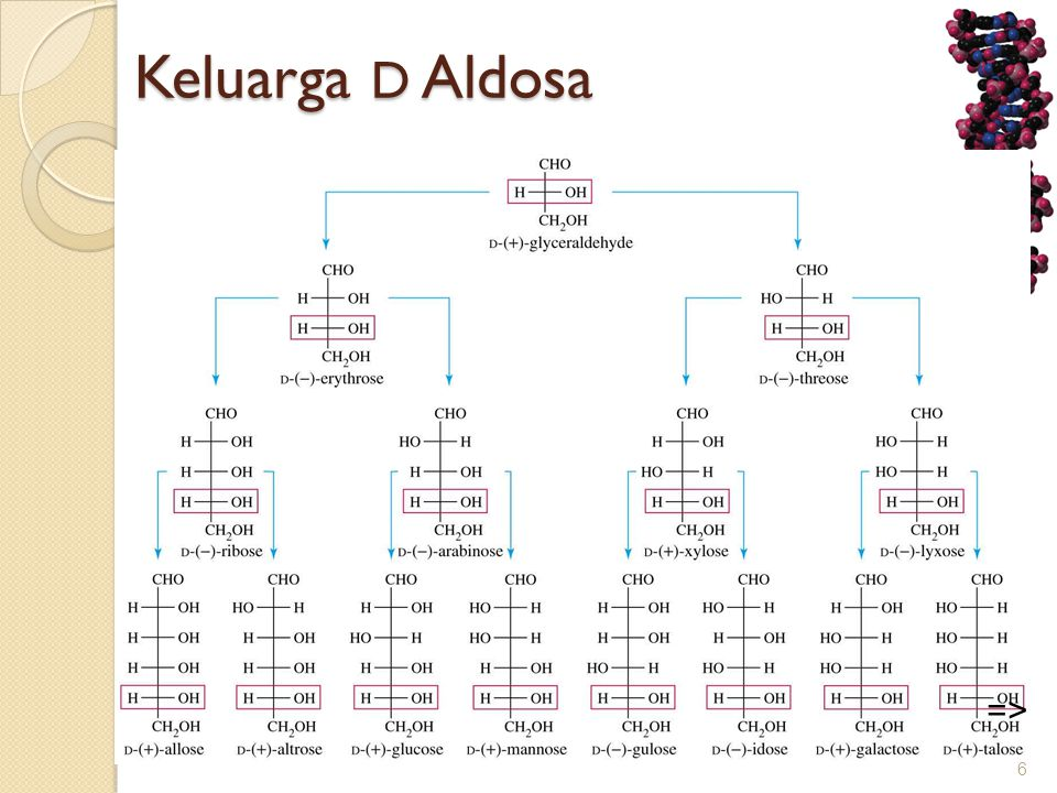 Keluarga D Aldosa =>
