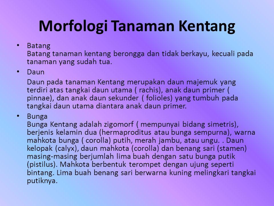 Morfologi Tanaman Kentang
