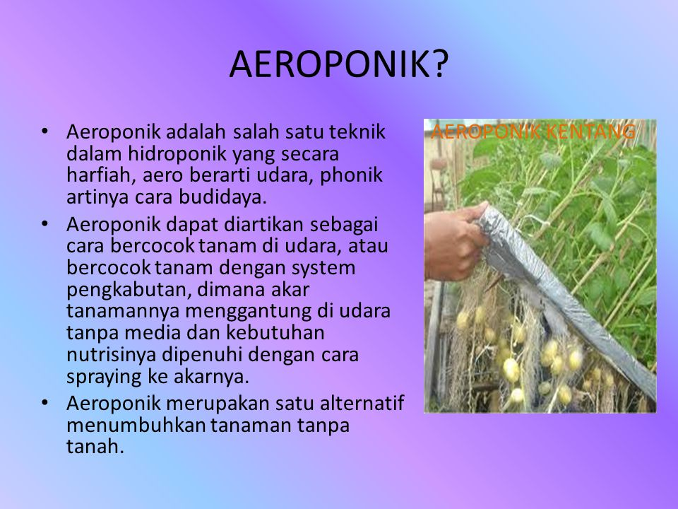 AEROPONIK Aeroponik adalah salah satu teknik dalam hidroponik yang secara harfiah, aero berarti udara, phonik artinya cara budidaya.