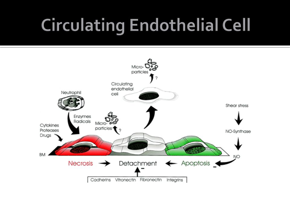 Circulating Endothelial Cell