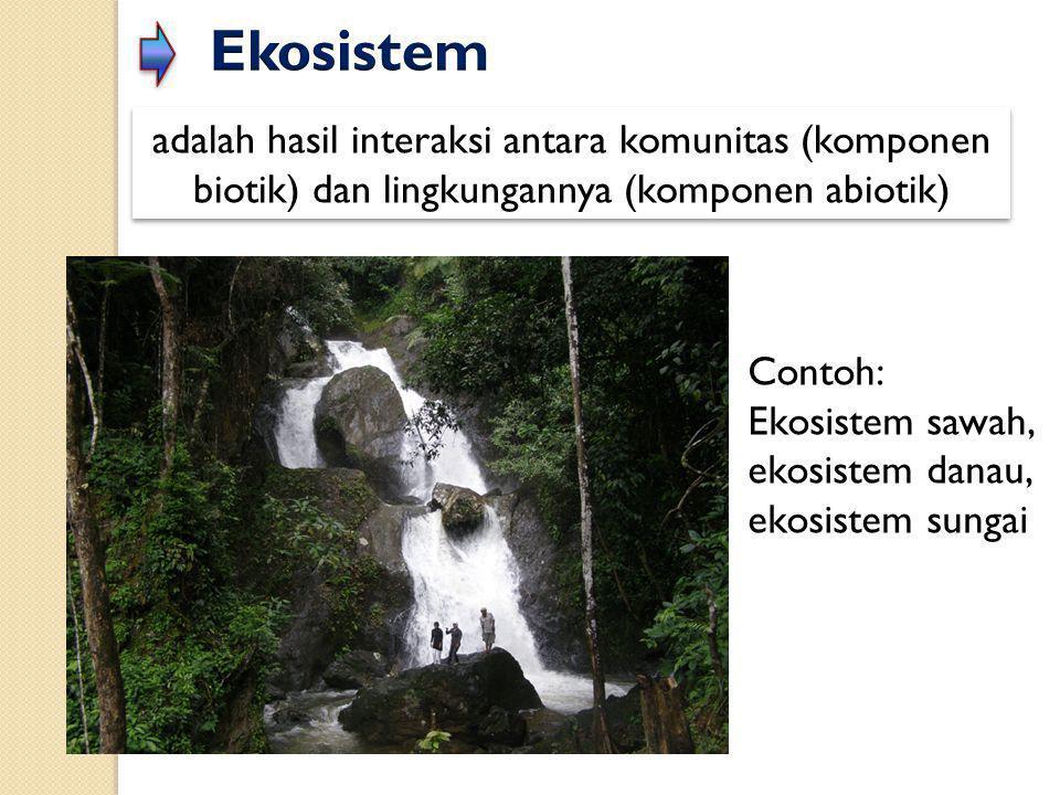 Ekosistem adalah hasil interaksi antara komunitas (komponen biotik) dan lingkungannya (komponen abiotik)