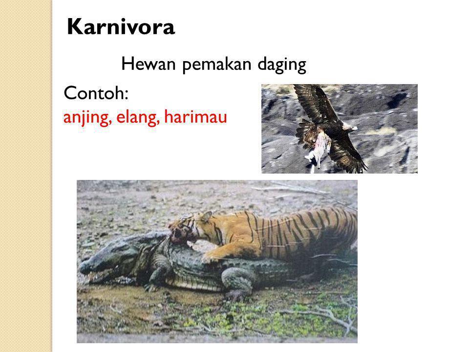 Karnivora Hewan pemakan daging Contoh: anjing, elang, harimau