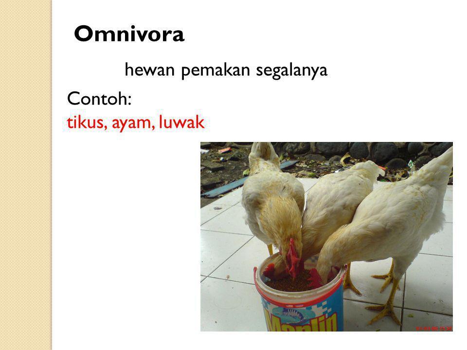 Omnivora hewan pemakan segalanya Contoh: tikus, ayam, luwak