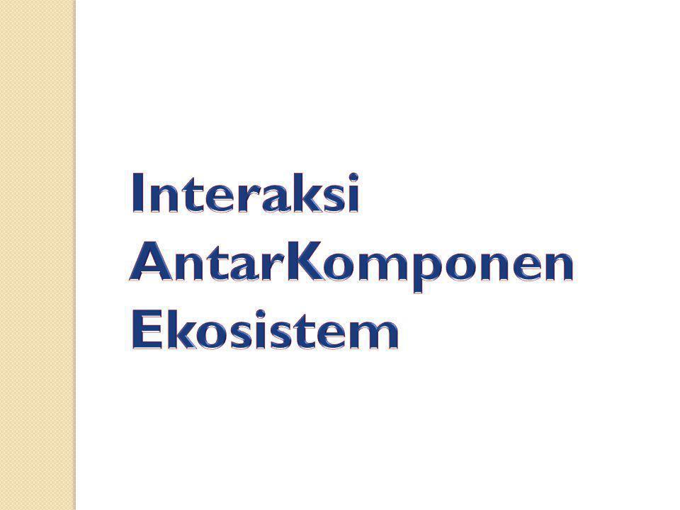 Interaksi AntarKomponen Ekosistem