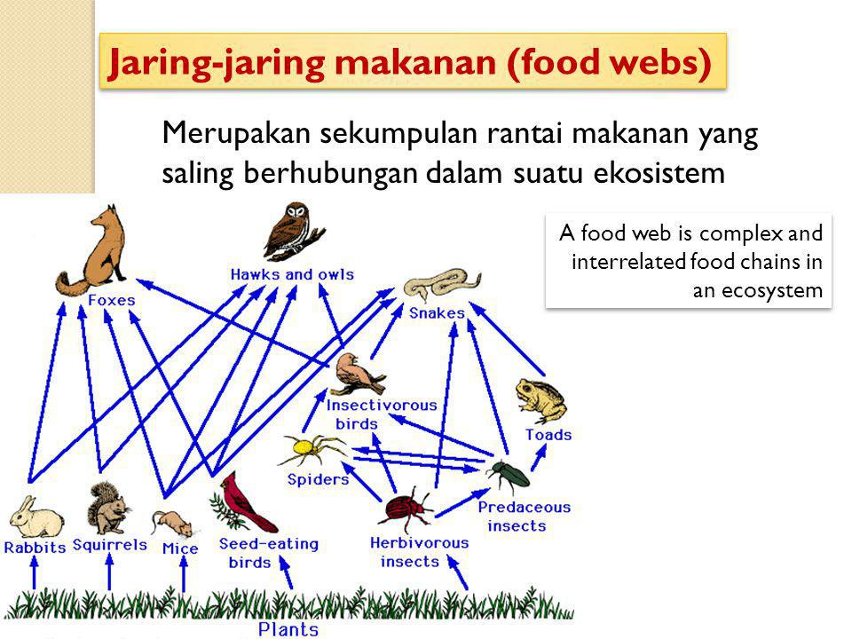 Jaring-jaring makanan (food webs)