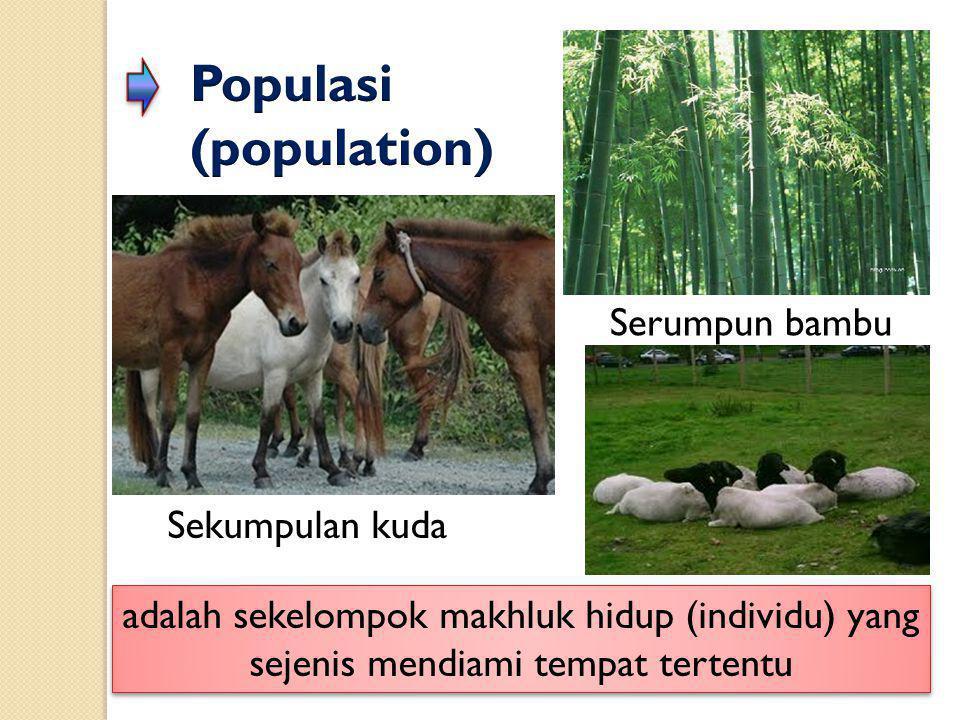 Populasi (population)