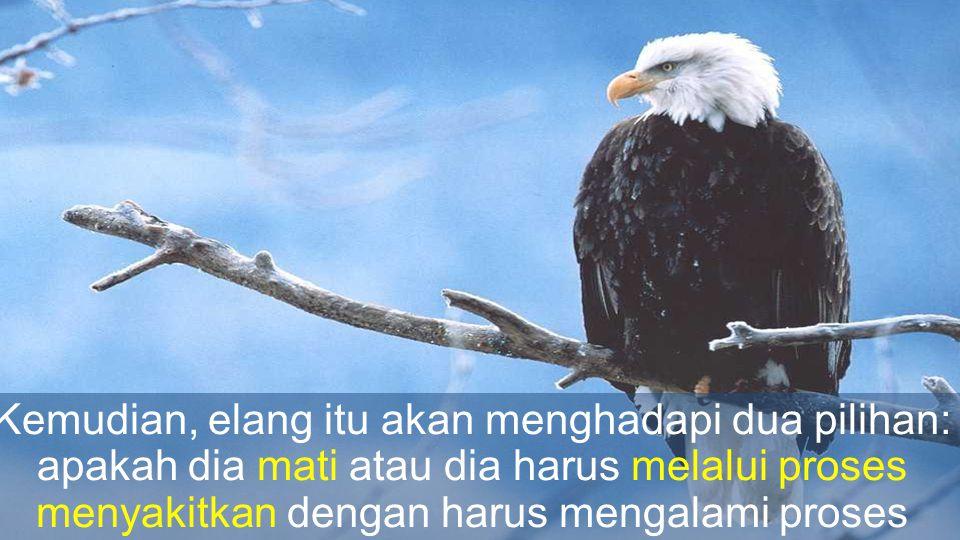 Kemudian, elang itu akan menghadapi dua pilihan: apakah dia mati atau dia harus melalui proses menyakitkan dengan harus mengalami proses perubahan yang berlangsung selama 150 hari.