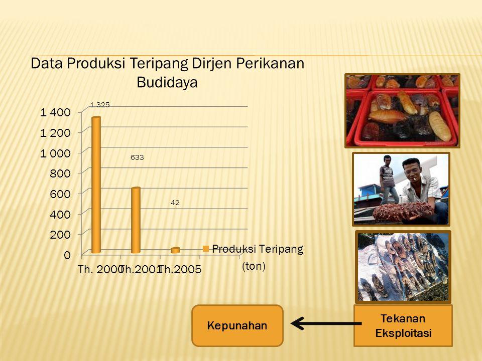 Data Produksi Teripang Dirjen Perikanan Budidaya
