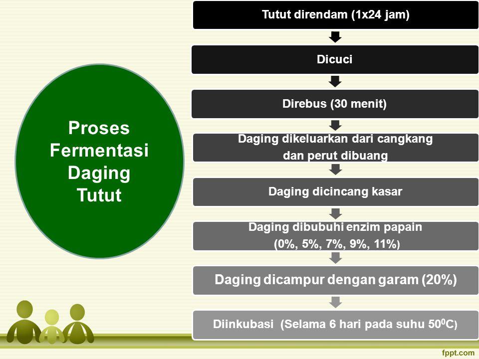 Proses Fermentasi Daging Tutut