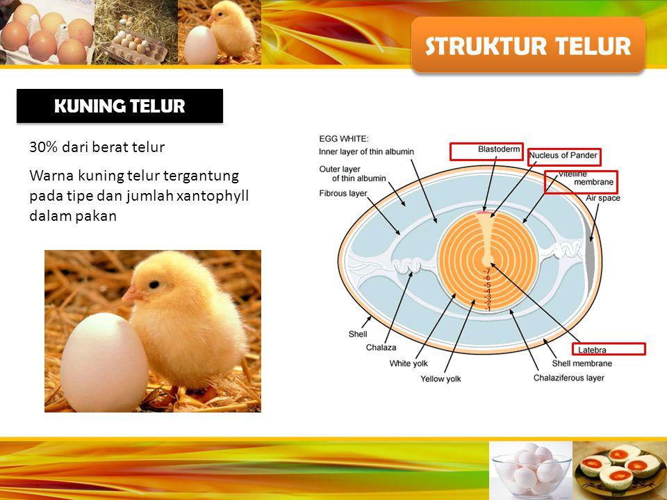 STRUKTUR TELUR KUNING TELUR 30% dari berat telur