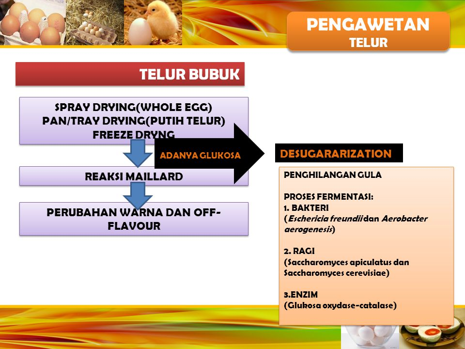 PENGAWETAN TELUR BUBUK TELUR SPRAY DRYING(WHOLE EGG)