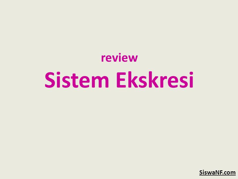 review Sistem Ekskresi