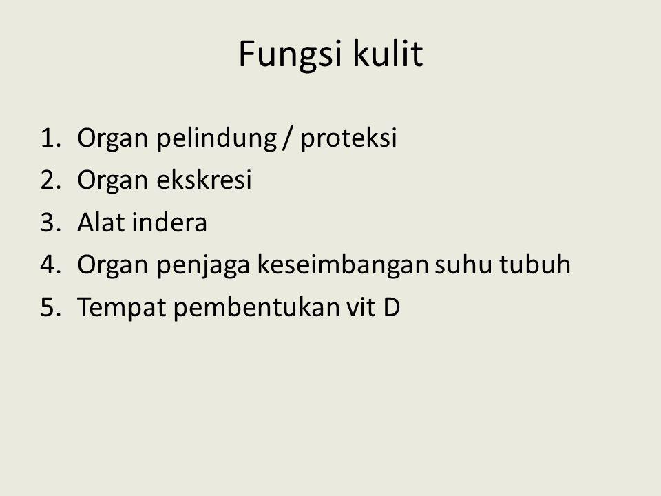 Fungsi kulit Organ pelindung / proteksi Organ ekskresi Alat indera